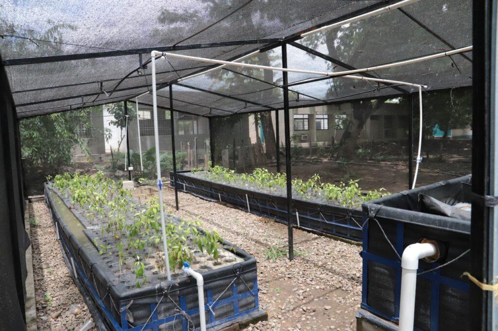 El SENA inaugura nueva unidad acuícola y agrícola en Conejo, La Guajira   Noticias de Buenaventura, Colombia y el Mundo
